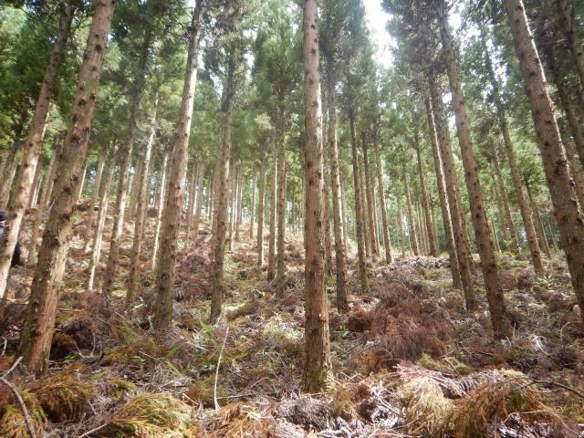 【カーボン・オフセットで森づくり-63-】宮崎県諸塚村 森の維持活用を模索 モザイク林層の森林整備に