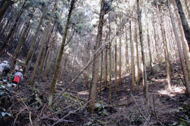 林業の成長産業化に向け、令和3年度予算等で支援 路網の整備・強化等 意欲ある林業経営者育成