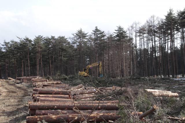 林業機械化シンポで情報提供 イノベーション推進 林野庁研究指導課・木下仁氏