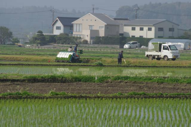 需要に合わせた水稲生産更に重要に 主食用作付136万㌶ 収穫量は776万t見込む ~令和2年産~