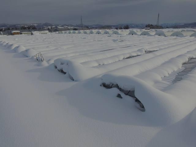 豪雪被害からの経営再建 各県が独自の対策 国の事業活用し復旧支援