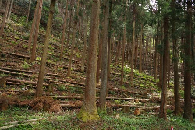 意向調査進展不十分 森林経営管理制度に課題 ~規制改革会議~