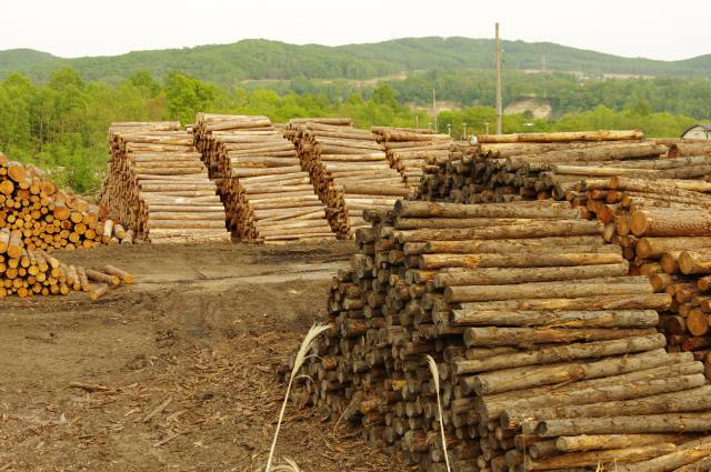 木材需給に新たな動き 中央需給連絡協議会 「価格上昇」見込む 生産量増大などの意向も