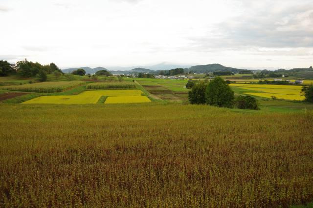 適時・適切な施肥で高品質生産 規格大くくり化等 肥料法改正で使いやすく