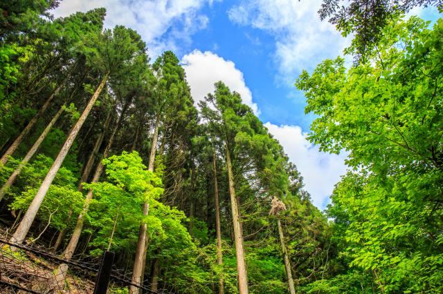 4年度予算に3500億円 「新しい林業」実現へ 伐採~再造林の収支+に