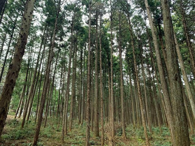 豊かな森林次世代に 森林を適正に管理 「グリーン成長」の実現 ~新基本計画~