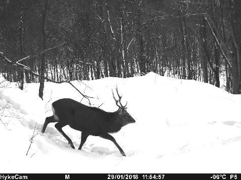 防護柵の比較検討 国有林野事業研究発表会